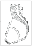 The path of the head must follow the arc of the pelvic cavity